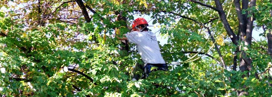 Tree Care - Fine Tree Service- Tree Care: Pruning ...