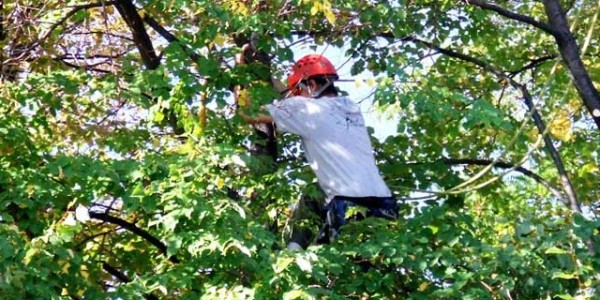 Tree Care | Pruning, Removing, Stump Grinding & More