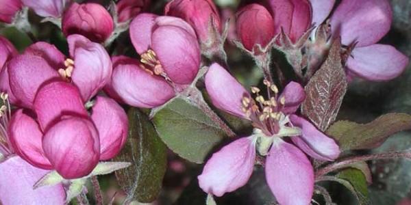 Plant Care (Tree & Turf Care)